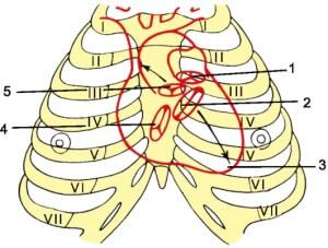 Проекція клапанів серця